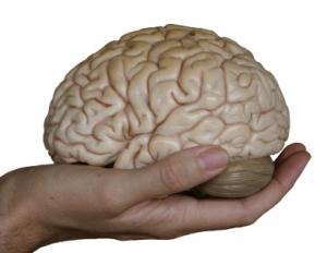 En hjerneblødning er en blodansamling i hjernevevet. Ill.foto: mammamaart, iStockphoto