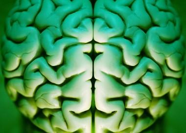 utsnittsbilde av en menneskehjerne