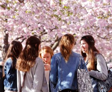 gruppe ungdommer under blomstrende trær
